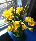 my daffodils TH